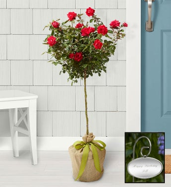 Knockout Rose Tree with Personalized Plaque