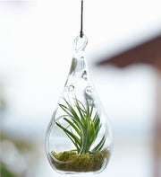 Hanging Airplant Terrarium