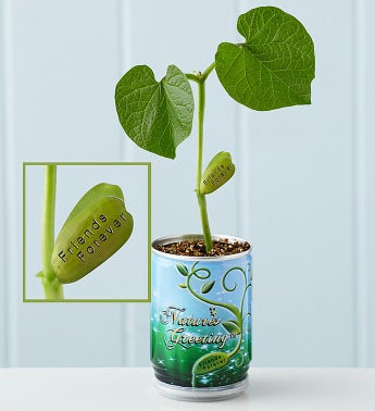 Nature's Greeting Magic Bean Plant