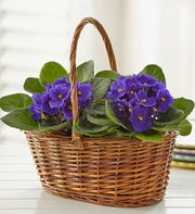 Basket of Blooming Violets