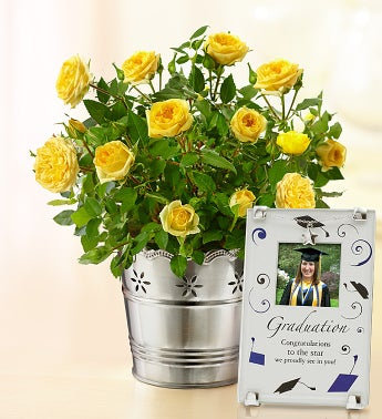 Graduation Yellow Rose