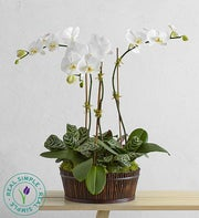 White Orchid Bamboo Garden by Real Simple�
