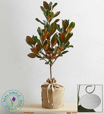 Magnolia Tree by Real Simple�
