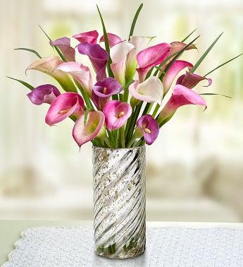 Lavender Beauty Calla Lilies
