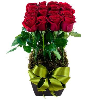 12 Red Roses Garden Design