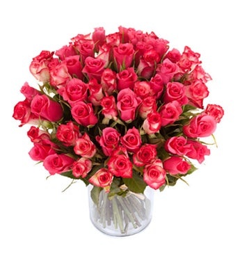 Pink Lolita Roses