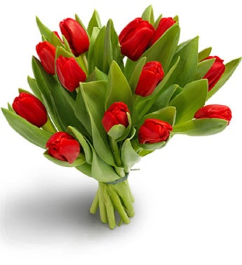 Ravishing Red Tulips