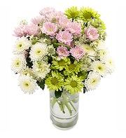 Classy Chrysanthemums