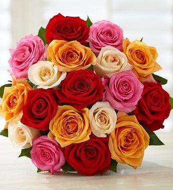 18 Footballentine Roses