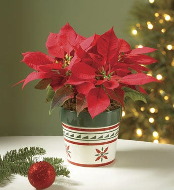 red poinsettia in ceramic planter