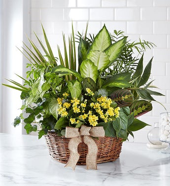 green plant, flowering plants, in planter