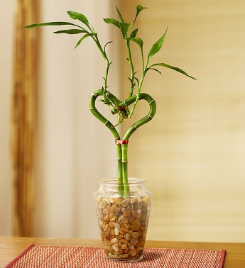 Send mom a bamboo plant!