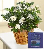 Cherished Gardenia