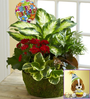 Happy Birthday Dish Garden with Free Sad Sam�