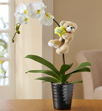 Get Well Orchid