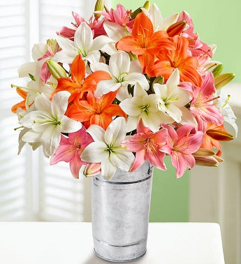 Vibrant Summer Lilies, Over 50 Blooms