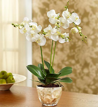 Silk Phalaenopsis Orchid with Pot