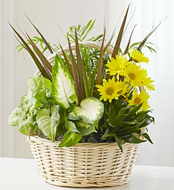 Dish Garden with Fresh Cut Flowers