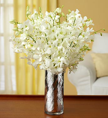 White Elegance Orchids